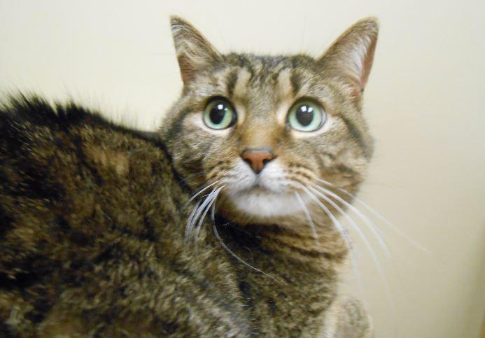 Highland Park Cat Allergy Veterinary