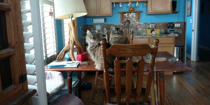 Highland Park Cat Blood Pressure Veterinary
