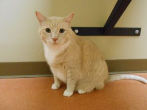 Highland Park Cat EKG Veterinary