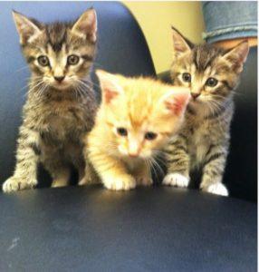 Highland Park Cat Preventive Care