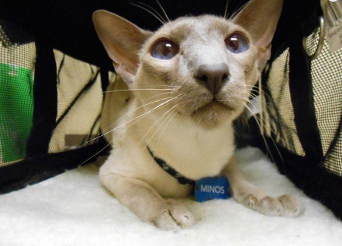 Highland Park Cat Ultrasound Veterinary