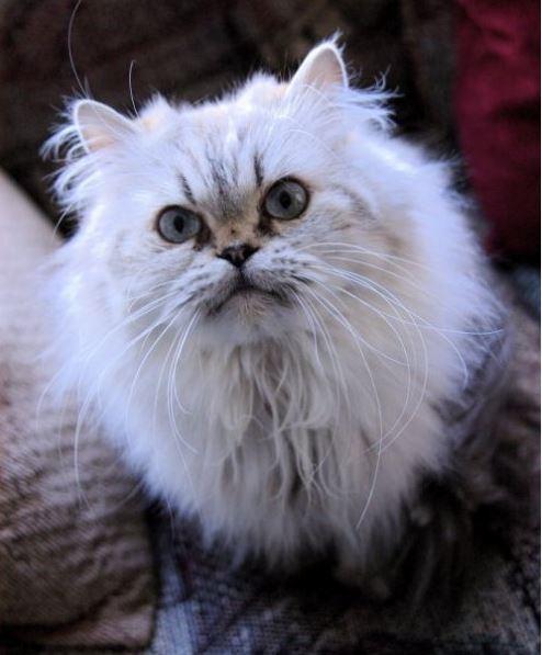 Highland Park Cat Xray Veterinary