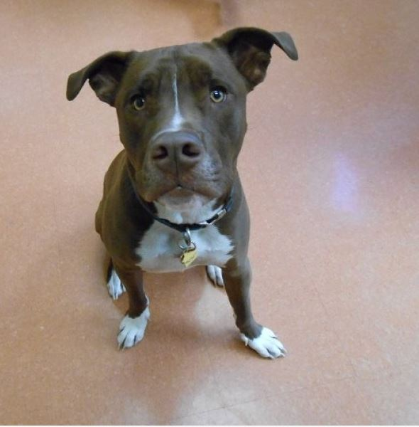 Highland Park Dog Allergy Veterinary