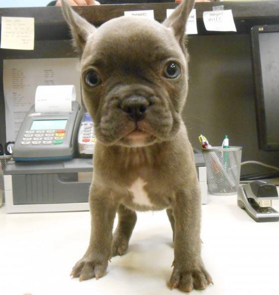 Highland Park Dog Chip Implantation Veterinary