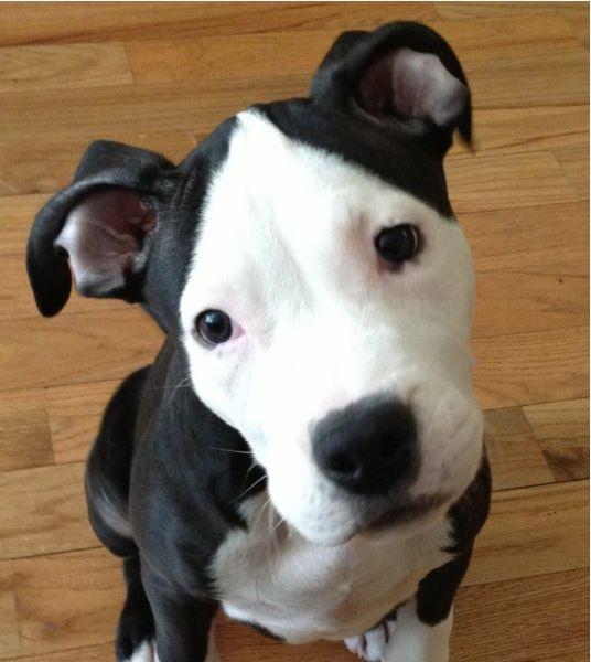 Highland Park Dog Dietary Weight Management Veterinary