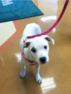 Highland Park Dog Travel Health Certificat Veterinary