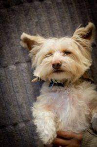 Highland Park Dog Xray Veterinary