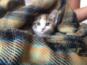Highland Park Pet Cat Veterinary