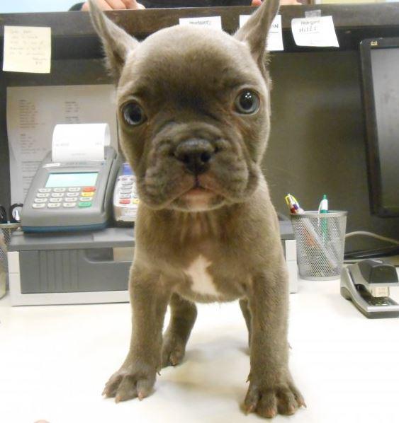 Highland Park Pet Dog Veterinary