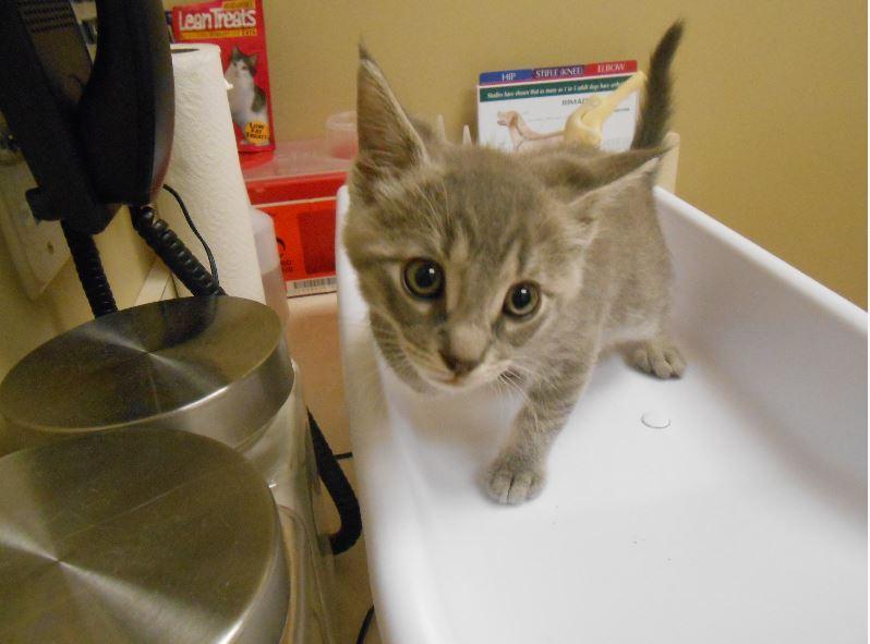 Highland Park Pet Feline Veterinary