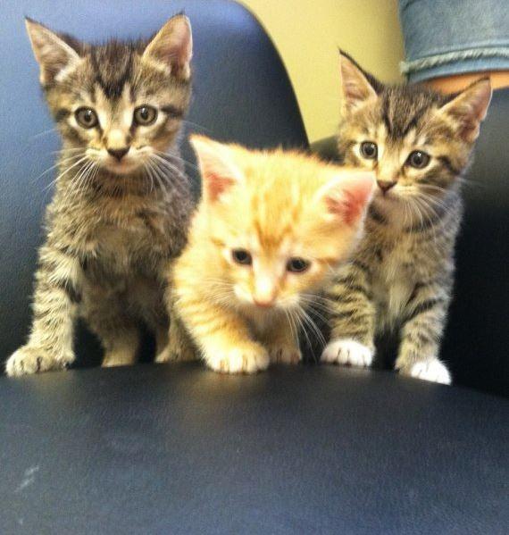 Highland Park Pet Kitten Veterinary