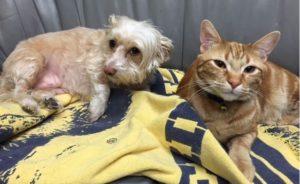 Highland Park Pet Preventive Care