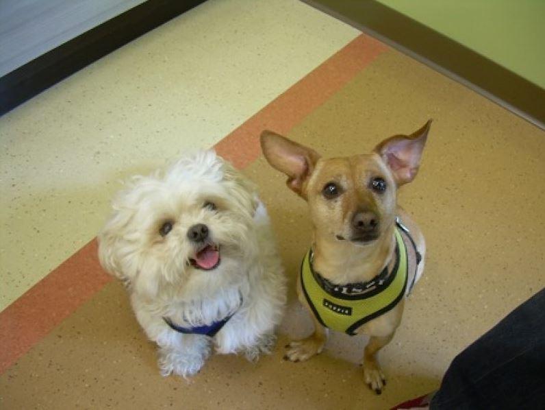 Highland Park Pet Pulse Oximetry Veterinary