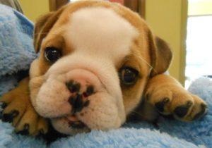Highland Park Pet Puppy Veterinary