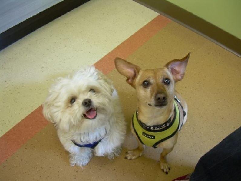 Highland Park Pet Travel Health Certificate Veterinary