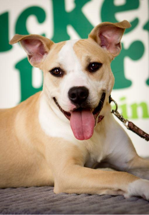 Highland Park Pet Ultrasound Veterinary