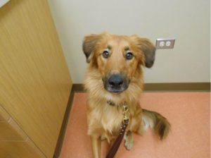 Highland Park Senior Geriatric Dog Care Veterinary