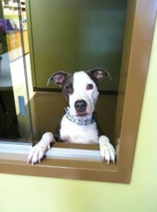 Highland Park Vet Dog Vaccines